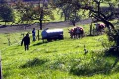 Felder und Wiesen (28)
