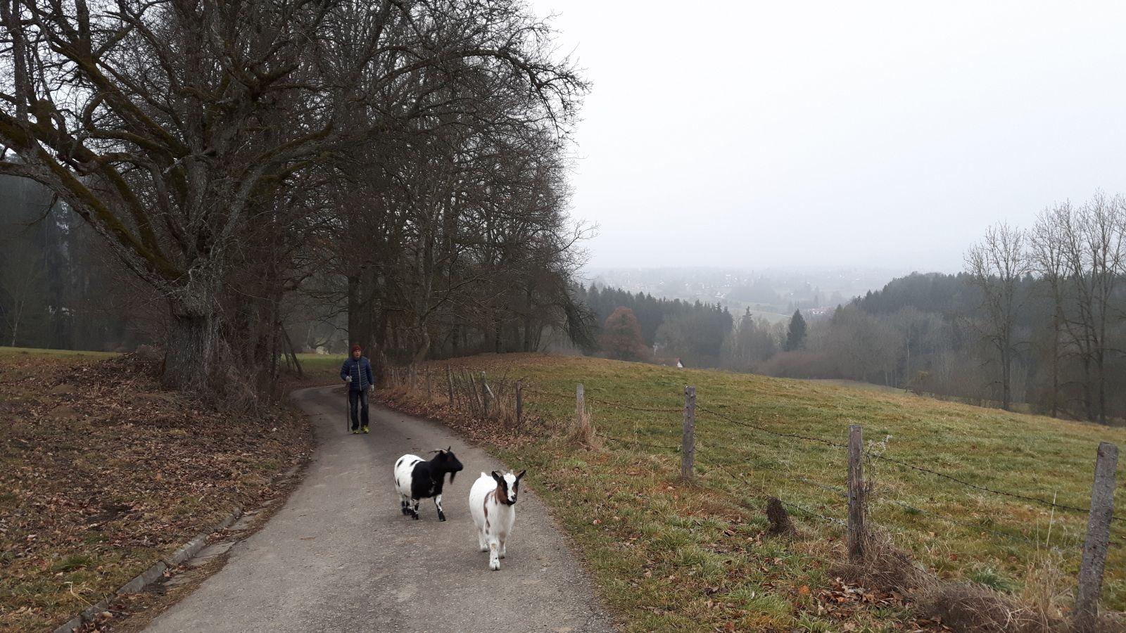Gebhardts und Tiere (3)