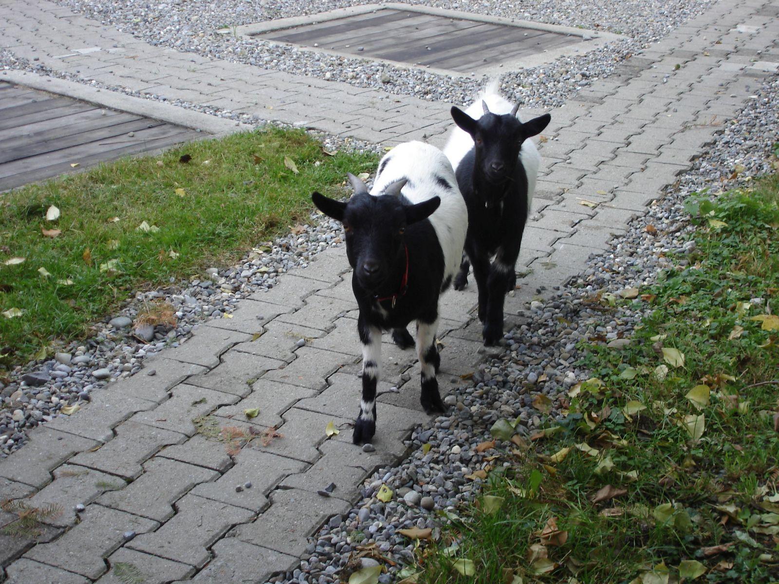 Gebhardts und Tiere (42)