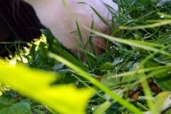 Gebhardts und Tiere (35)